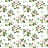 Bezszwowy wzór z wzrastał pączki i liście na bielu. Zdjęcie Royalty Free