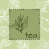 Bezszwowy wzór z zieloną herbatą, pociągany ręcznie Obraz Stock