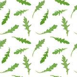 Bezszwowy wzór z zielonymi liśćmi rucola arugula Wektorowa ręka rysująca ilustracja Fotografia Stock
