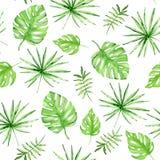 Bezszwowy wzór z zielonymi palmowymi liśćmi Obraz Royalty Free