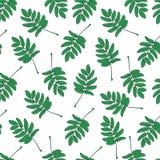 Bezszwowy wzór z zielonymi rowan liśćmi Zdjęcie Royalty Free