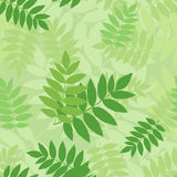 Bezszwowy wzór z zielonymi rowan liśćmi. Zdjęcie Stock