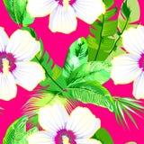 bezszwowy wzoru Czereśniowy okwitnięcie Wzór z różowymi kwiatami Ornament z orientalnymi motywami wektor ilustracji