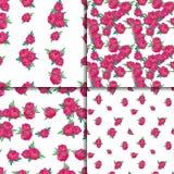 Bezszwowy wzoru set z różowymi peoniami Obraz Royalty Free