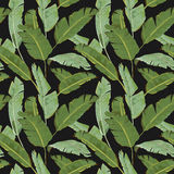bezszwowy wzoru Tropikalna palma opuszcza tło Bananowi liście Zdjęcia Stock