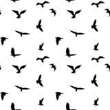 Bezszwowy wzór latających ptaków sylwetki na białym tle Fotografia Royalty Free