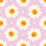 Bezszwowy wzór z białymi kropkami i chamomiles na różowym tle Zdjęcie Royalty Free