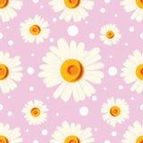 Bezszwowy wzór z białymi kropkami i chamomiles na różowym tle Obrazy Royalty Free