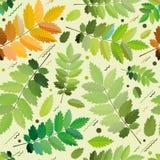 Bezszwowy zielony ulistnienie dla drukować Obrazy Stock
