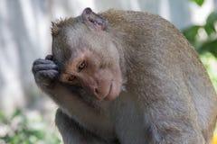 Beztroskie małpy Obraz Royalty Free