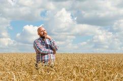 Bezwłosy rolnik z brody pozycją wokoło spojrzeniem i w pszenicznym polu Rolnik lub agronom sprawdzamy ilość banatka, żniwo Tim Obrazy Royalty Free