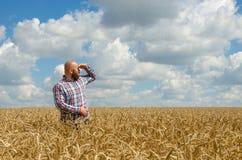 Bezwłosy rolnik z brody pozycją wokoło spojrzeniem i w pszenicznym polu Rolnik lub agronom sprawdzamy ilość banatka, żniwo Tim Fotografia Stock