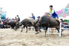Büffel-laufendes Festival Stockfotografie