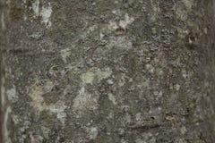 BG-Betong-rått Royaltyfria Bilder