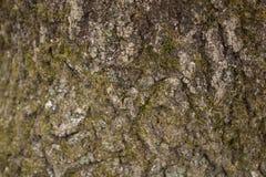 BG-Madera-Árbol-Corteza-luz-musgo CR2 Fotografía de archivo libre de regalías