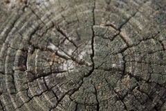 BG-Wood-Tree-Trunk-Center Royalty Free Stock Photos
