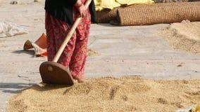 Bhaktapur, Катманду, Непал - 18-ое октября 2018 постарел азиатские женщины суша, просеивающ, молотящ зерен в традиционном пути акции видеоматериалы