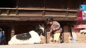 BHAKTAPUR, KATHMANDU, NEPAL - 18 October 2018 Child feeding resting Goat. Cute Asian little girl play on the street near stock footage