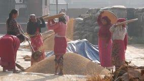 Bhaktapur, Katmandou, Népal - a 18 octobre 2018 vieilli les femmes asiatiques séchant, tamisant, battant des grains de manière tr banque de vidéos