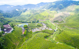 Bharat Green tea plantation Stock Images