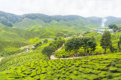 Bharat tea plantation Royalty Free Stock Photo
