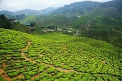 Bharat Tea Plantation, Malásia foto de stock royalty free