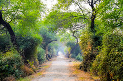 Bharatpur Bird Sanctuary, Rajasthan, India. The pathway of the the Natural Reserve Park Royalty Free Stock Images