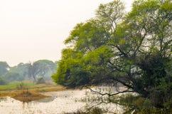 Bharatpur Bird Sanctuary, Rajasthan, India. Vegetation of the Natural Reserve wetland Stock Photo