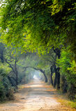 Bharatpur Bird Sanctuary, Rajasthan, India. A view inside The Keoladeo National Park, a natural reserve in Bharatpur, India Royalty Free Stock Image