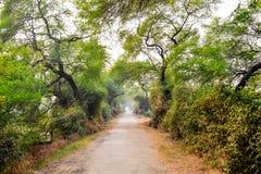 Bharatpur fågelfristad, Rajasthan, Indien Fotografering för Bildbyråer