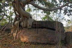 bhimbetka dziedzictwa miejsca świat Zdjęcie Royalty Free