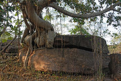 Bhimbetka- World Heritage site Royalty Free Stock Photo