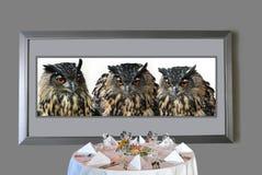 Búhos de águila hambrientos Fotografía de archivo