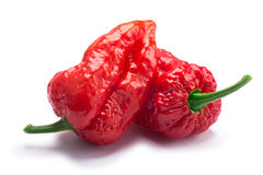 Bhut Jolika ghost peppers, paths. Bhut Jolokia ghost chili peppers Capsicum frutescens x Capsicum chinense hybrid. Clipping paths, shadow separated Royalty Free Stock Photo