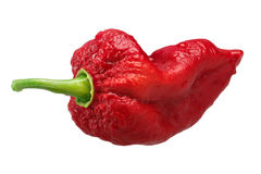 Bhut Jolika ghost peppers, paths. Bhut Jolokia ghost chili pepper Capsicum frutescens x Capsicum chinense hybrid. Clipping paths, shadowless Royalty Free Stock Photography