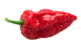 Bhut Jolika ghost peppers, paths. Bhut Jolokia ghost chili pepper Capsicum frutescens x Capsicum chinense hybrid. Clipping paths, shadowless Royalty Free Stock Images