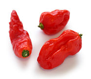 Bhut jolokia Stock Photo