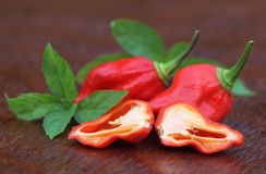 Bhut Jolokia chili pepper with mint leaves Stock Photography
