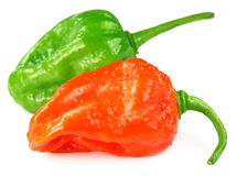 Bhut Jolokia chili peppers Stock Photography