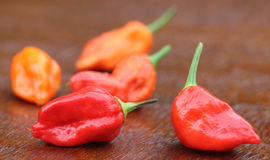 Bhut Jolokia chili peppers. Or the Naga Morich of Bangladesh Royalty Free Stock Photos
