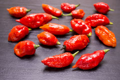 Bhut Jolokia fruit Royalty Free Stock Photos