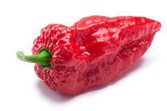 Bhut Jolokia ghost pepper, paths. Bhut Jolokia ghost chili pepper Capsicum frutescens x Capsicum chinense hybrid. Clipping paths, shadow separated Royalty Free Stock Photography