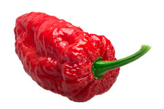 Bhut Jolokia ghost pepper, paths. Bhut Jolokia ghost chili pepper Capsicum frutescens x Capsicum chinense hybrid. Clipping paths, shadowless Royalty Free Stock Images