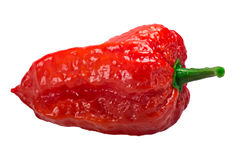 Bhut Jolokia ghost pepper, paths. Bhut Jolokia ghost chili pepper Capsicum frutescens x Capsicum chinense hybrid. Clipping paths, shadowless stock image