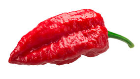 Bhut Jolokia ghost pepper, paths Stock Photography