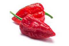 Bhut Jolokia ghost peppers, paths. Bhut Jolokia ghost chili peppers Capsicum frutescens x Capsicum chinense hybrid. Clipping paths, shadow separated Royalty Free Stock Image