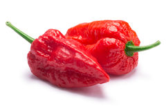 Bhut Jolokia ghost peppers, paths. Bhut Jolokia ghost chili peppers Capsicum frutescens x Capsicum chinense hybrid. Clipping paths, shadow separated Royalty Free Stock Photography