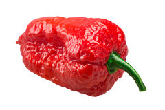 Bhut Jolokia ghost peppers, paths. Bhut Jolokia ghost chili pepper Capsicum frutescens x Capsicum chinense hybrid. Clipping paths, shadowless Royalty Free Stock Image
