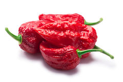 Bhut Jolokia ghost peppers, paths. Pile of Bhut Jolokia ghost chili peppers Capsicum frutescens x Capsicum chinense hybrid. Clipping paths, shadow separated Royalty Free Stock Images