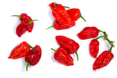 Bhut Jolokia ghost peppers, paths, top view. Piles of Bhut Jolokia ghost chili peppers Capsicum frutescens x Capsicum chinense hybrid. Clipping paths for each Royalty Free Stock Photo